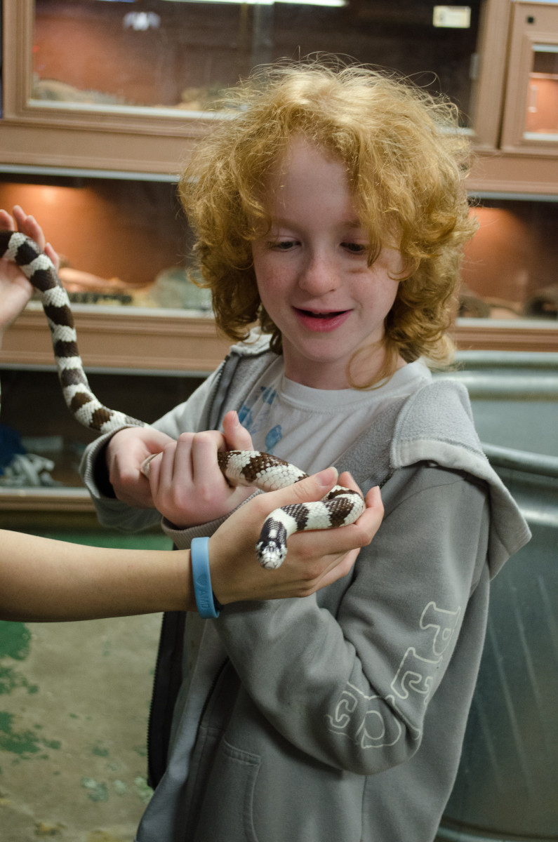 King Snake Species