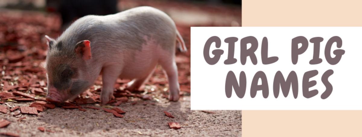 pet-pig-names