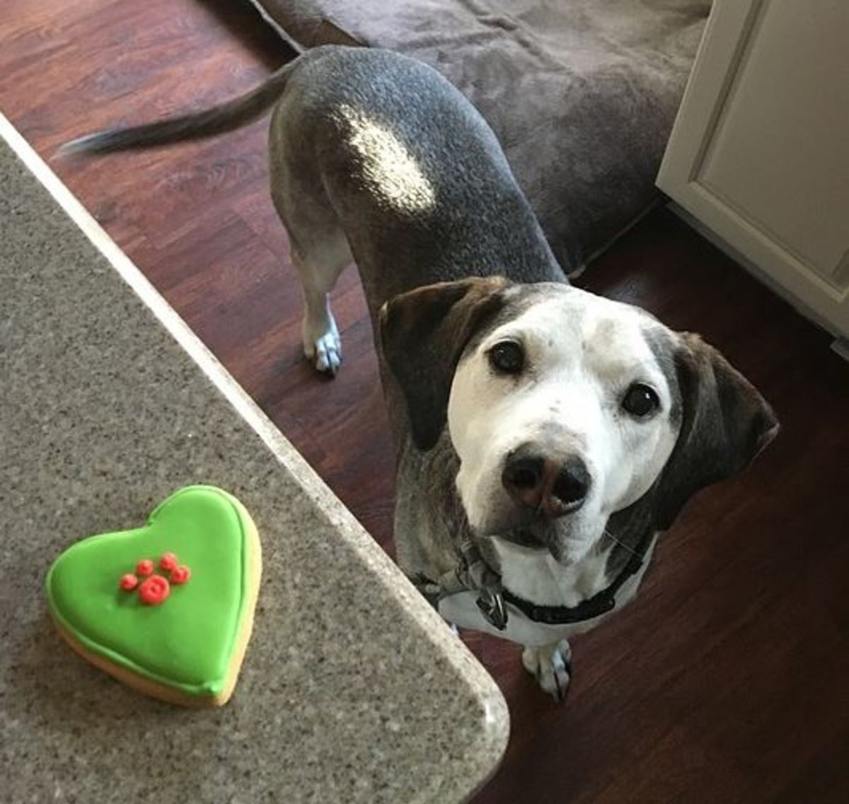Reward your dog by rushing together to go grab a cookie over the counter.