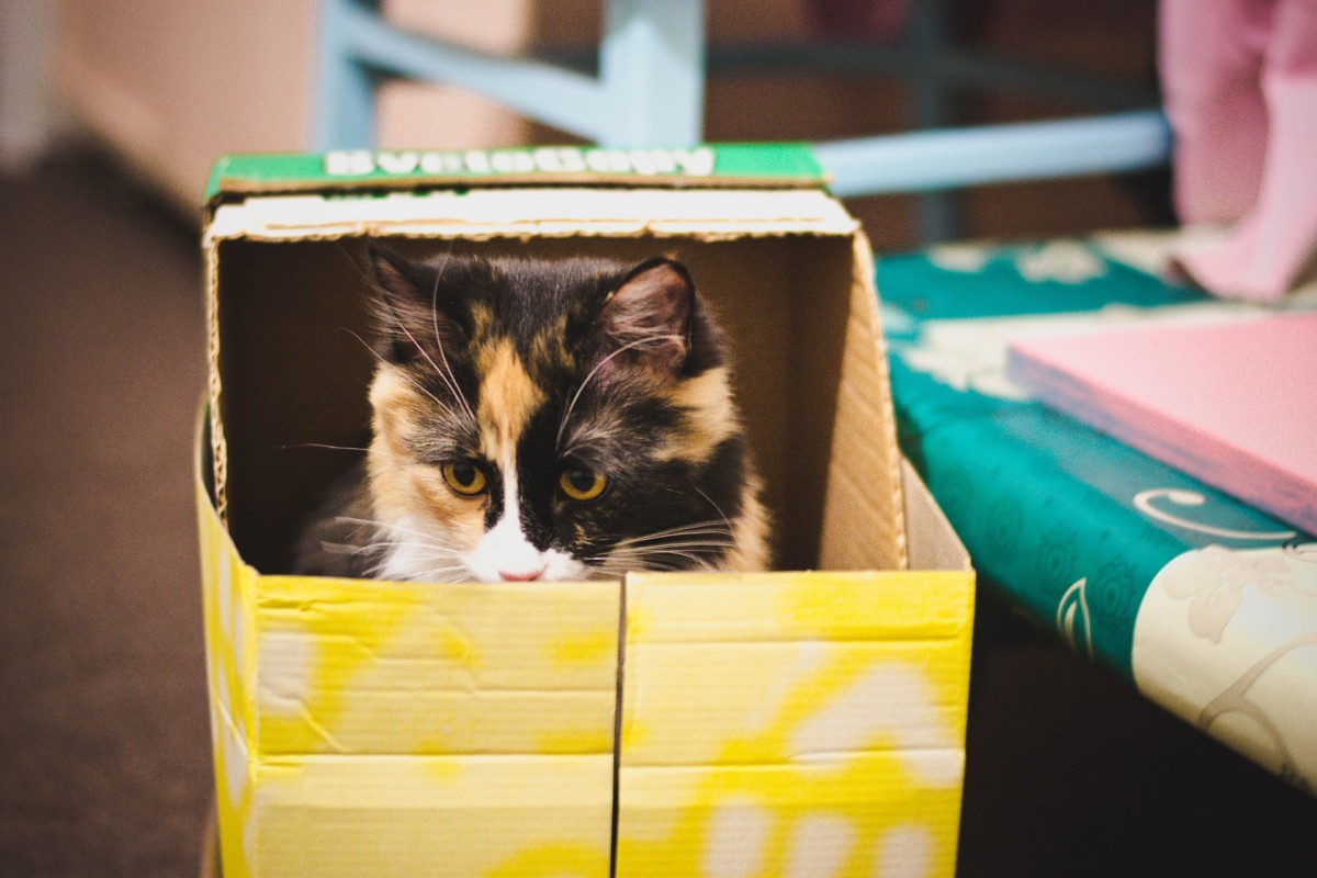 Cats love playing in boxes.
