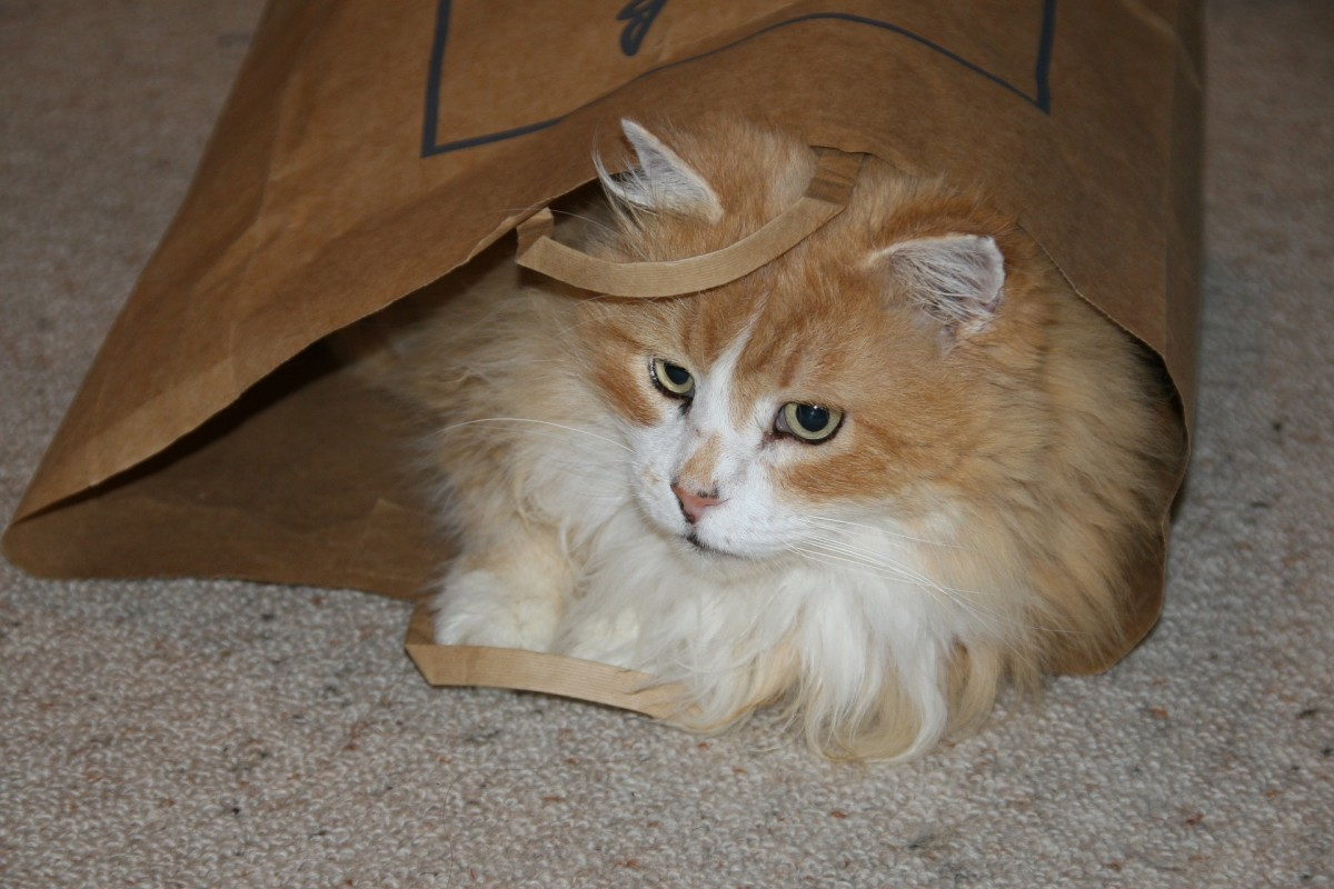 Paper bags are also another great cat play toy.