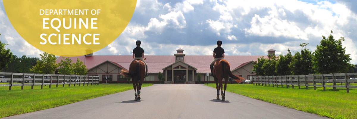 A bachelors in Equine Studies is always an option.