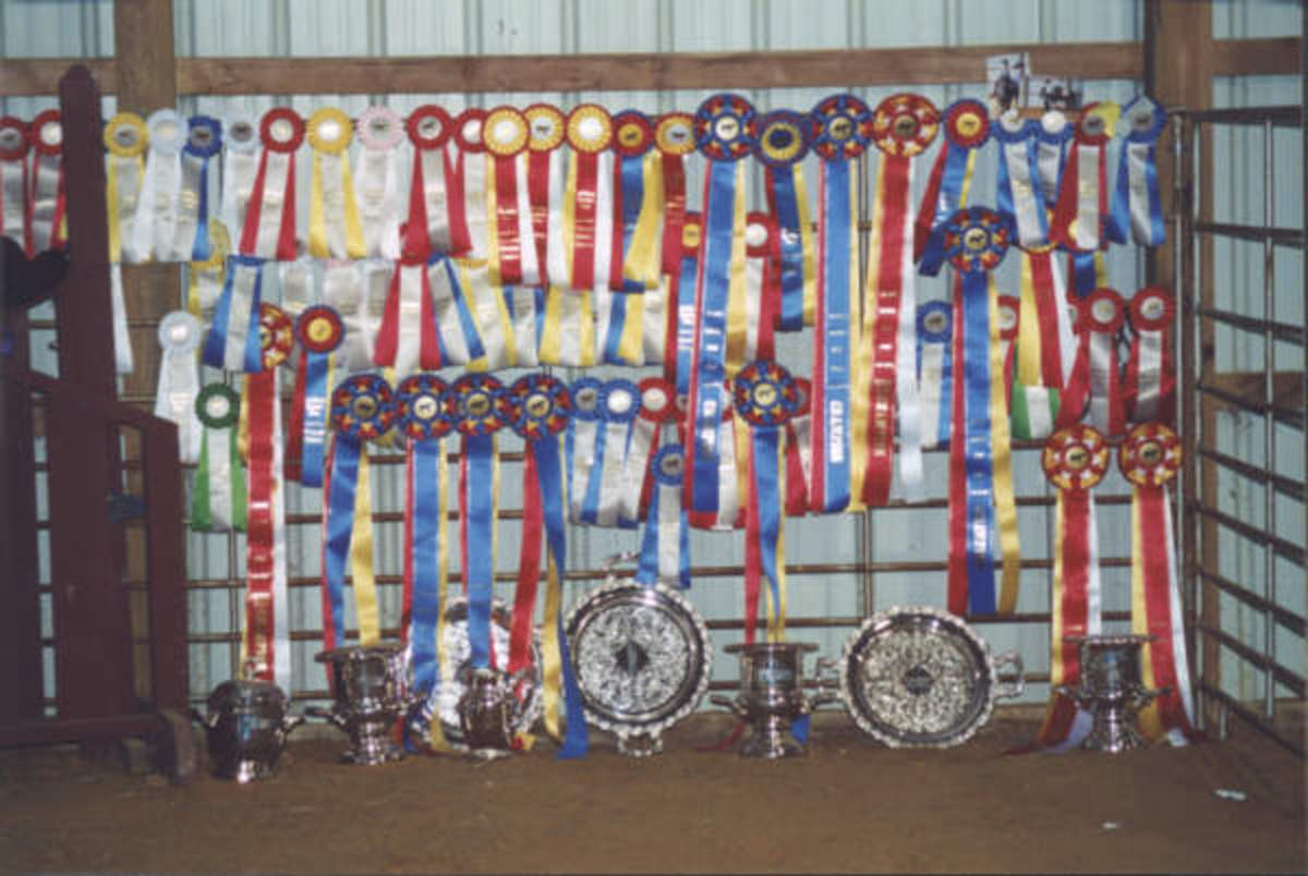 Competitive goals are great. Sometime you may find that those who work in the industry unless they are in the upper echelon of equestrian sports, have to put their own riding on hold for their customers.