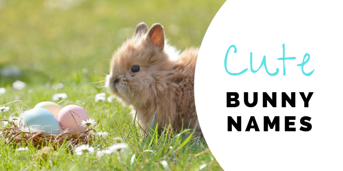 350+ Bunny Names for Your Floppy-Eared Friend | PetHelpful