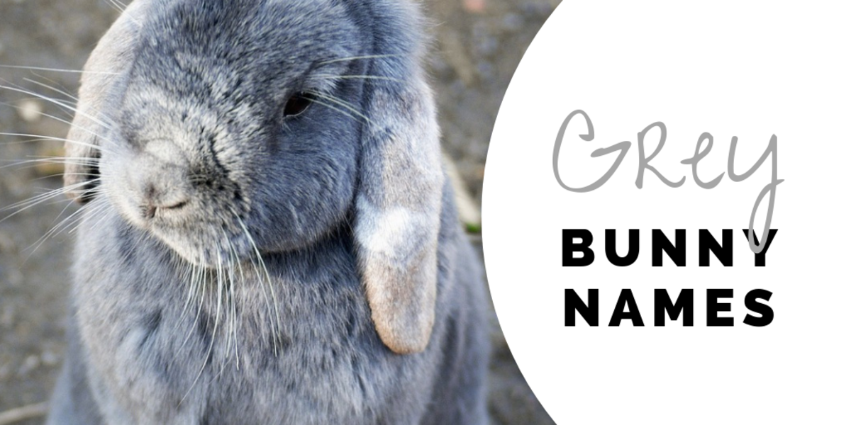 350 Bunny Names For Your Floppy Eared Friend Pethelpful