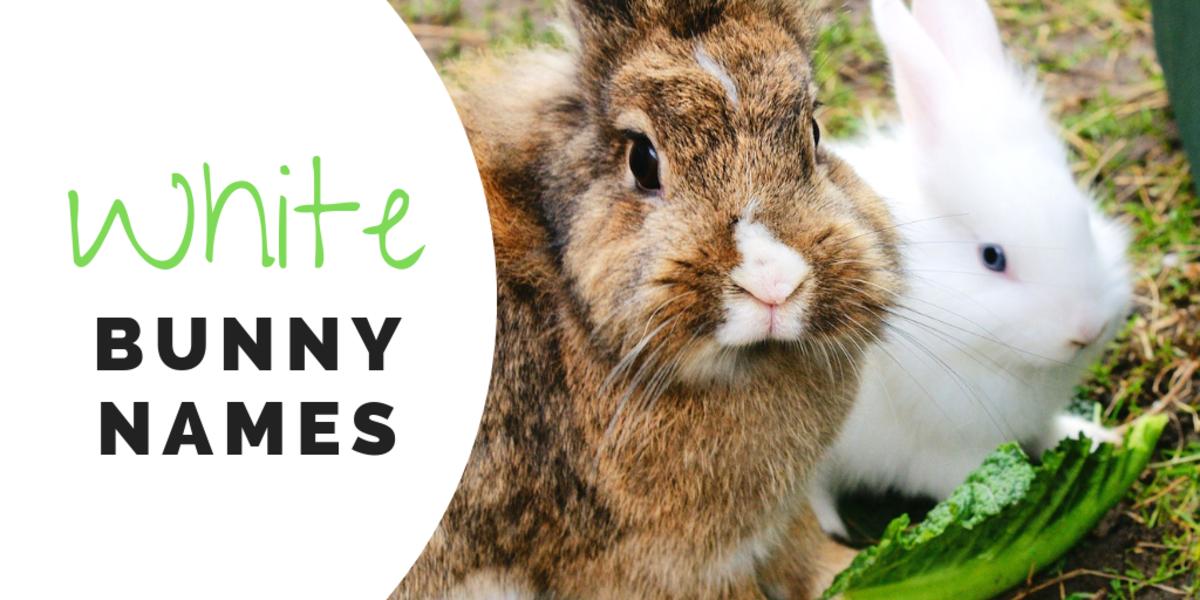 bunny-names