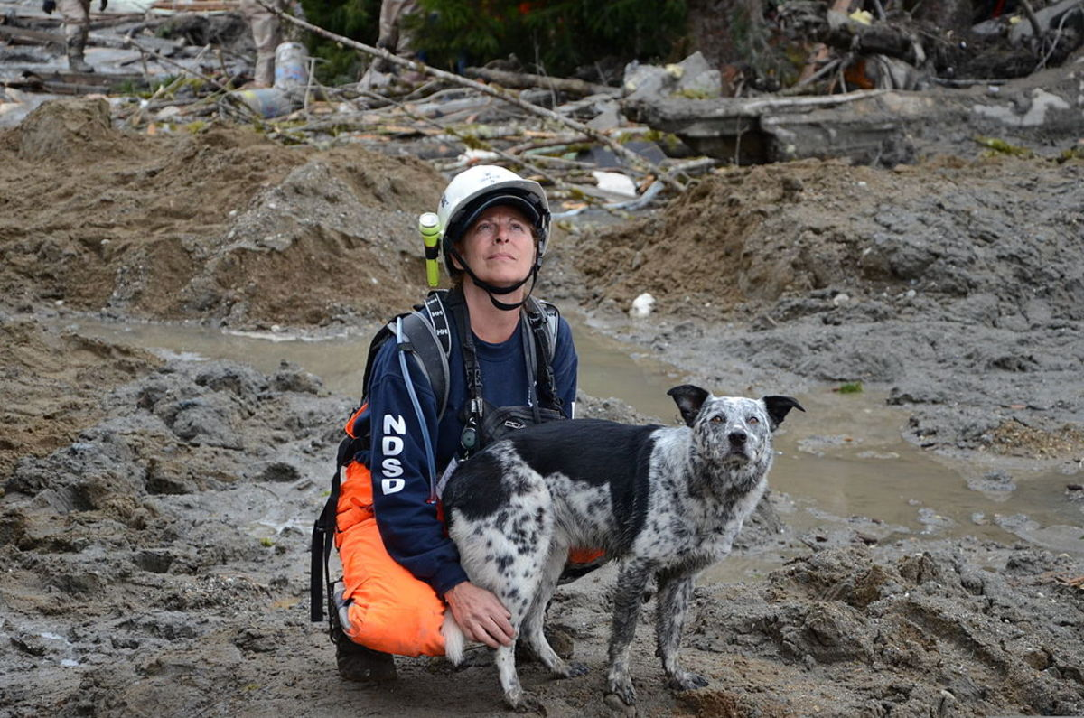 Working with Northwest Disaster Search Dogs, Lisa Bishop and her dog, Cody, watch the skies for the rescue helicopter to arrive