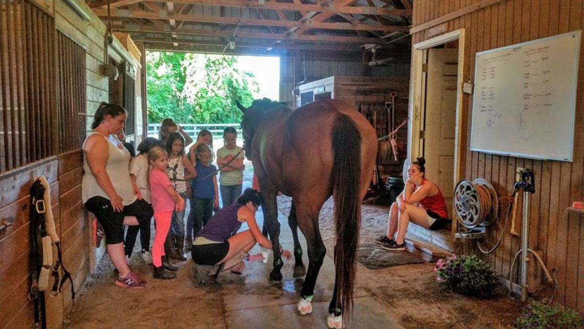 Be enthusiastic about learning all aspects of horses!