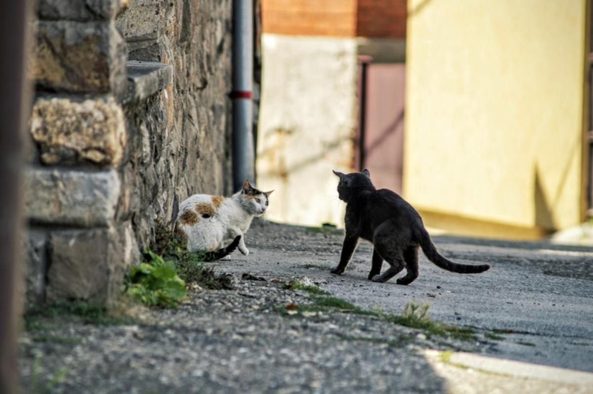Feral cats face speeding cars, dogs and other aggressive cats, to count just a few hazards.