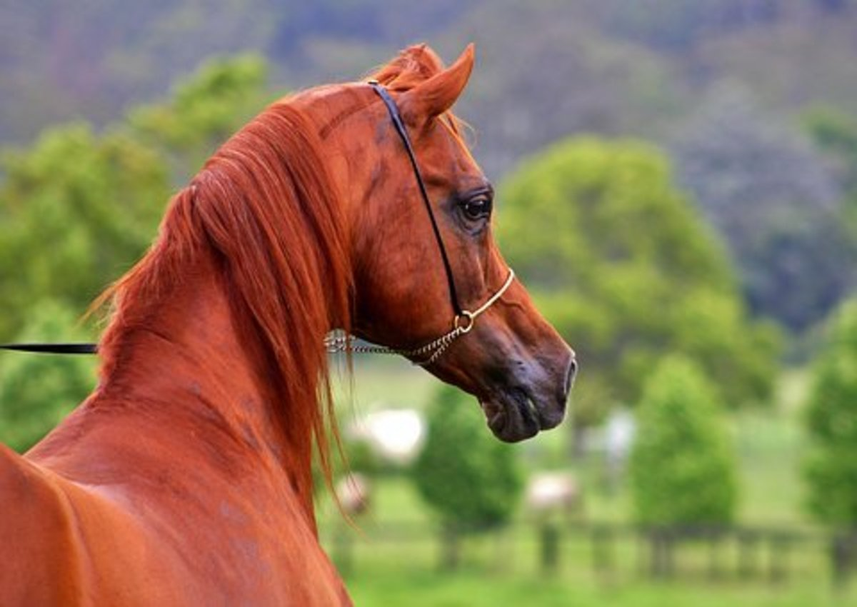 20 Fiery Red Names For Chestnut Horses Pethelpful By Fellow Animal Lovers And Experts