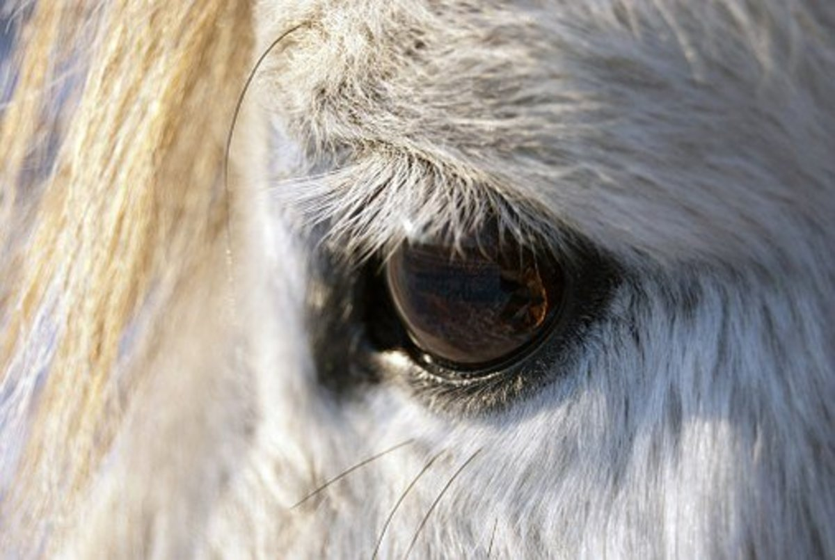 Shadowfax looking into your soul.
