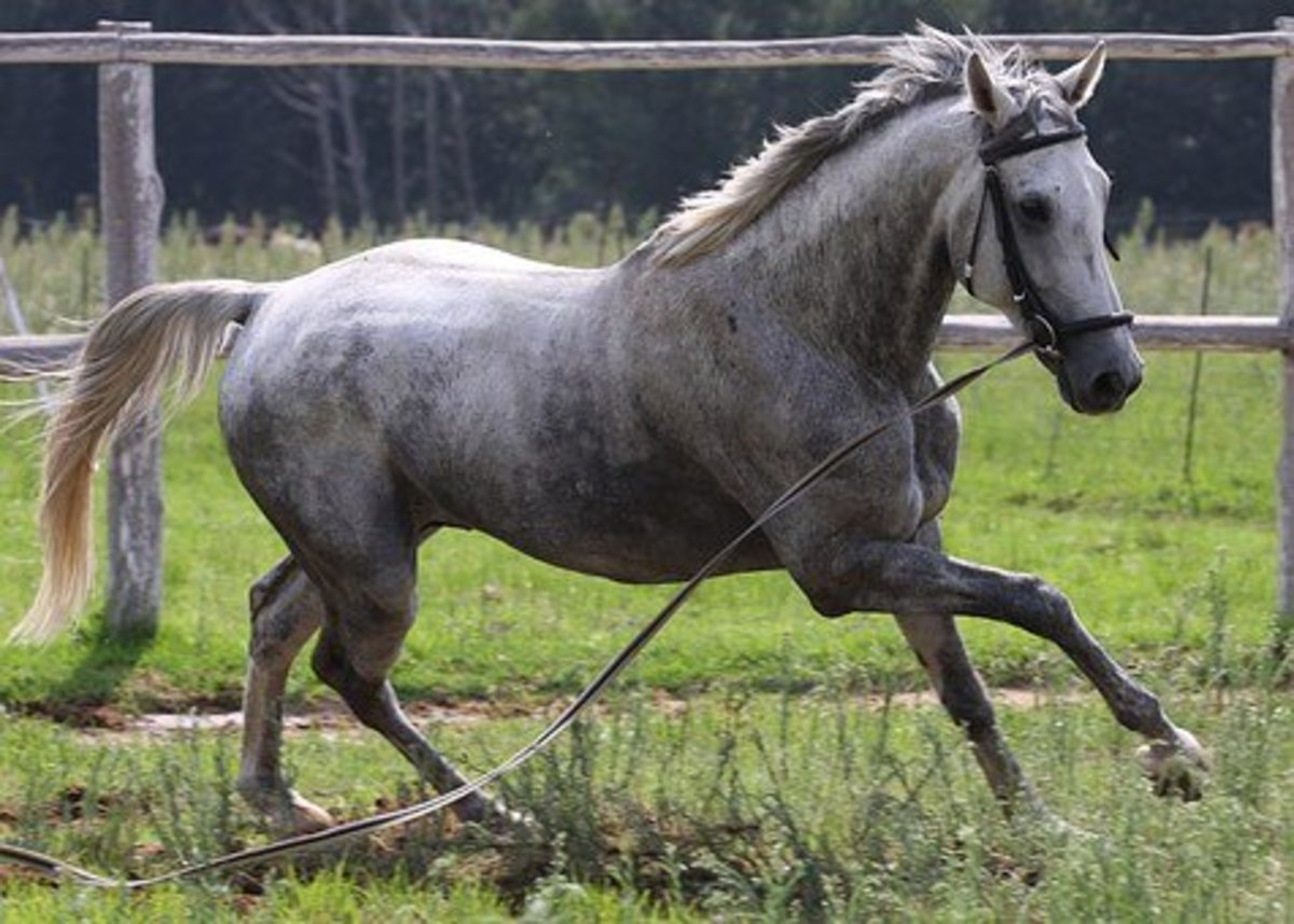 Naming this beautiful grey mare Gerd would be a great idea.