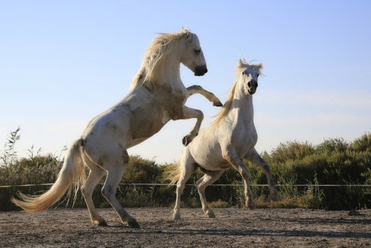 One of these fighting horses could well be named Ares.