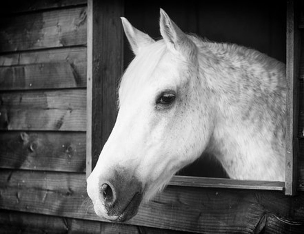 This regal mare could be named Hera.