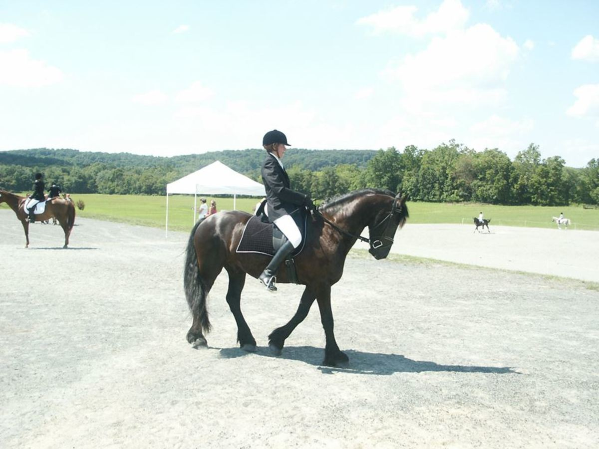 Riders that are planning on showing will most likely want to lease the horse for the duration of the show season.