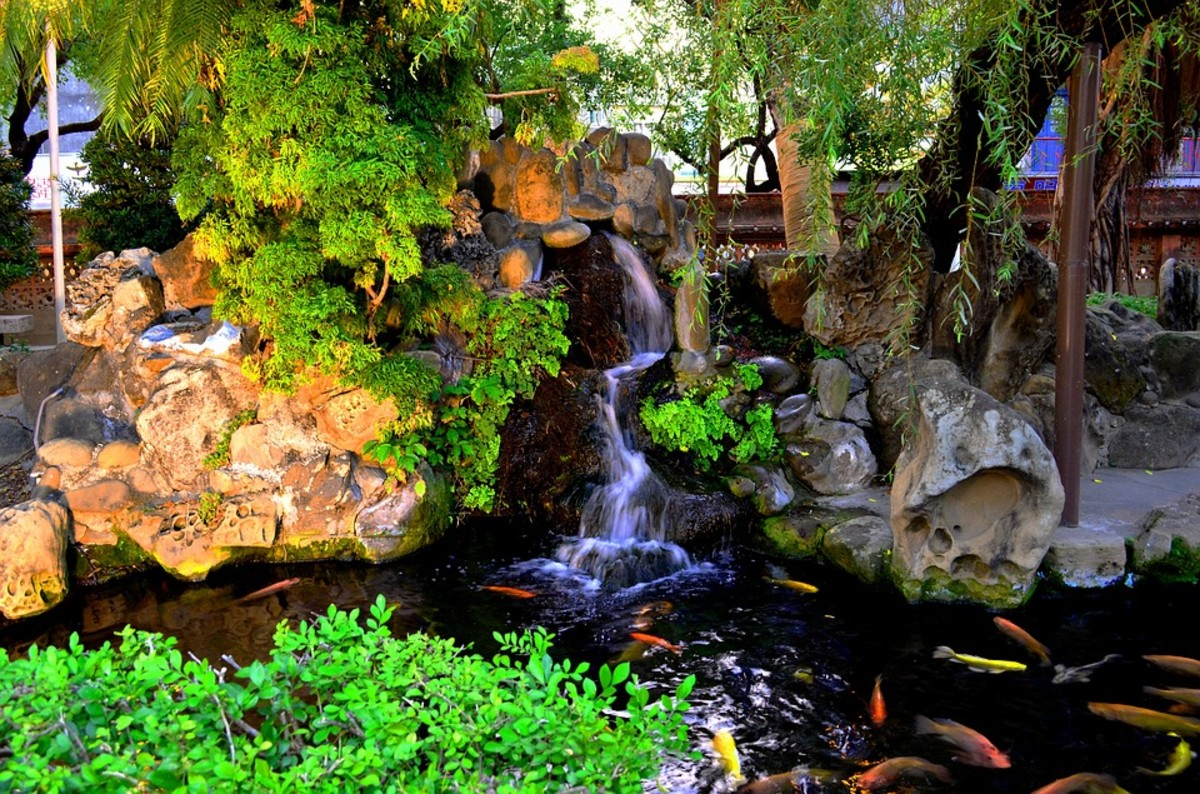 It's not unusual to find koi pond builders at clubs, who can provide great advice or services to create your own spectacular koi pond.
