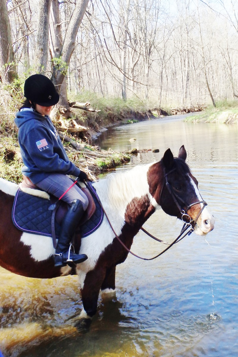 Buddy was a move-up horse for my friend Megan. I think she would credit him for many of the lessons she learned—also the fact that she is now a very confident rider.