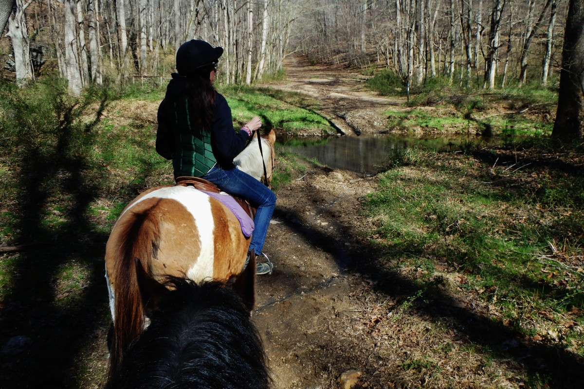 Chaps is one of my lesson horses that always loves to get out on a trail ride every once in a while.