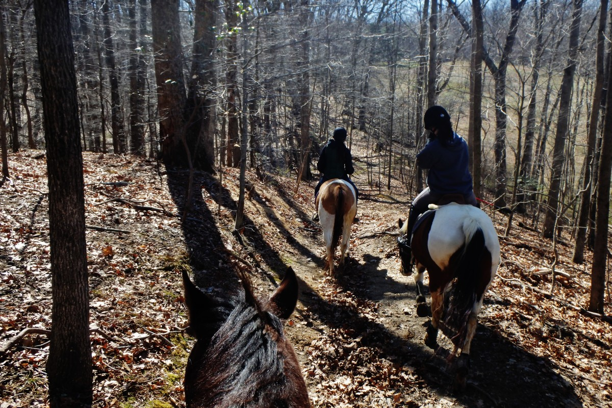 I recommend a first trail ride to be in a smaller group rather than a larger one. Just for safety reasons.