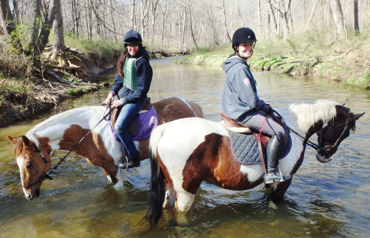 Our horses always love playing in the water on trail rides!