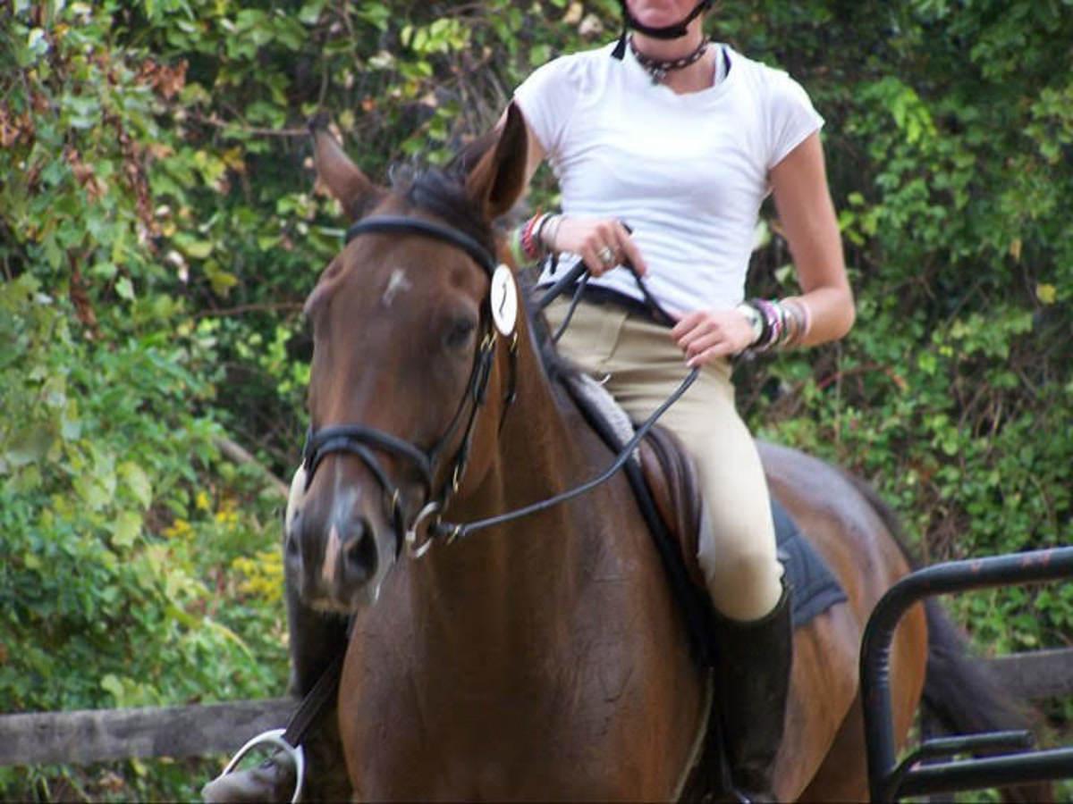 Kemerton and I leaving the ring after a dressage test at one of our home shows, he looks tired!