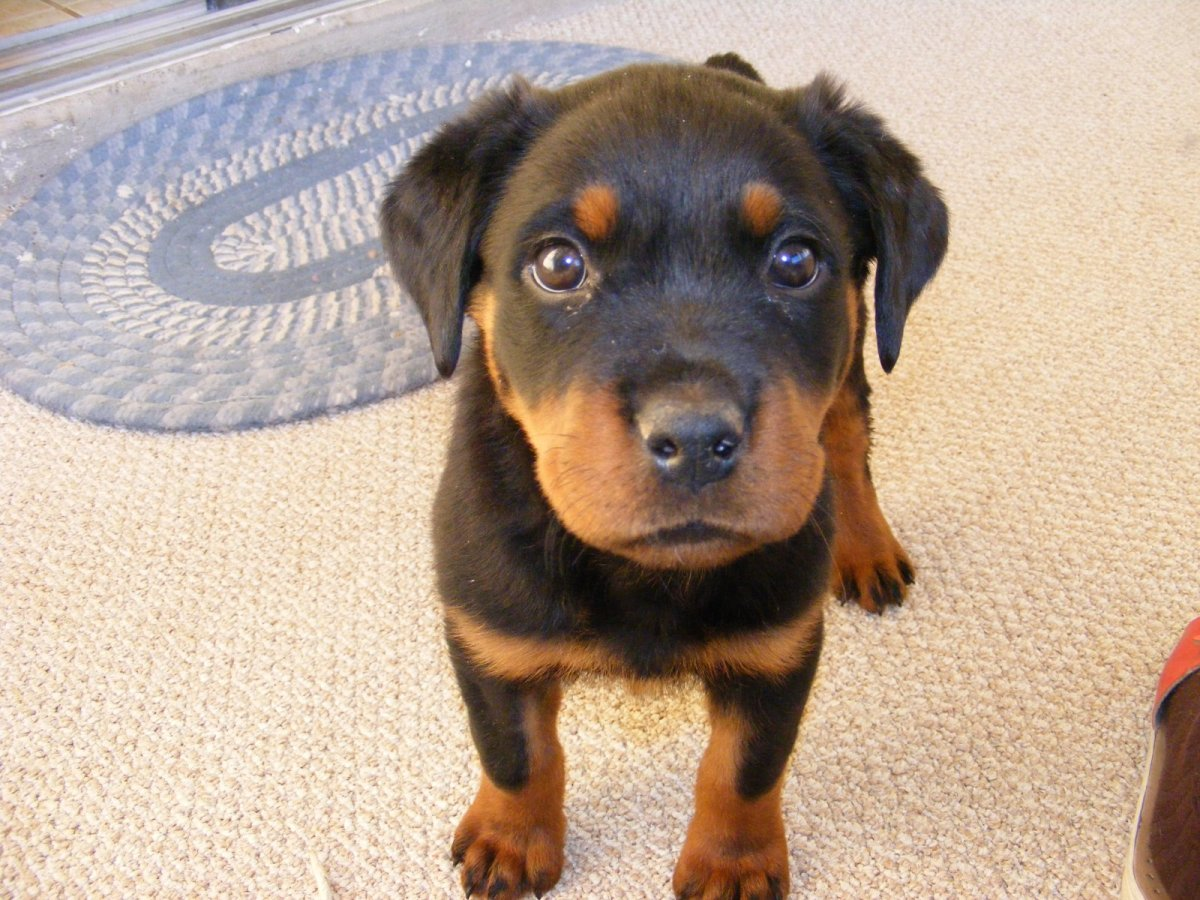 Puppies may start potty training as early as two months of age.