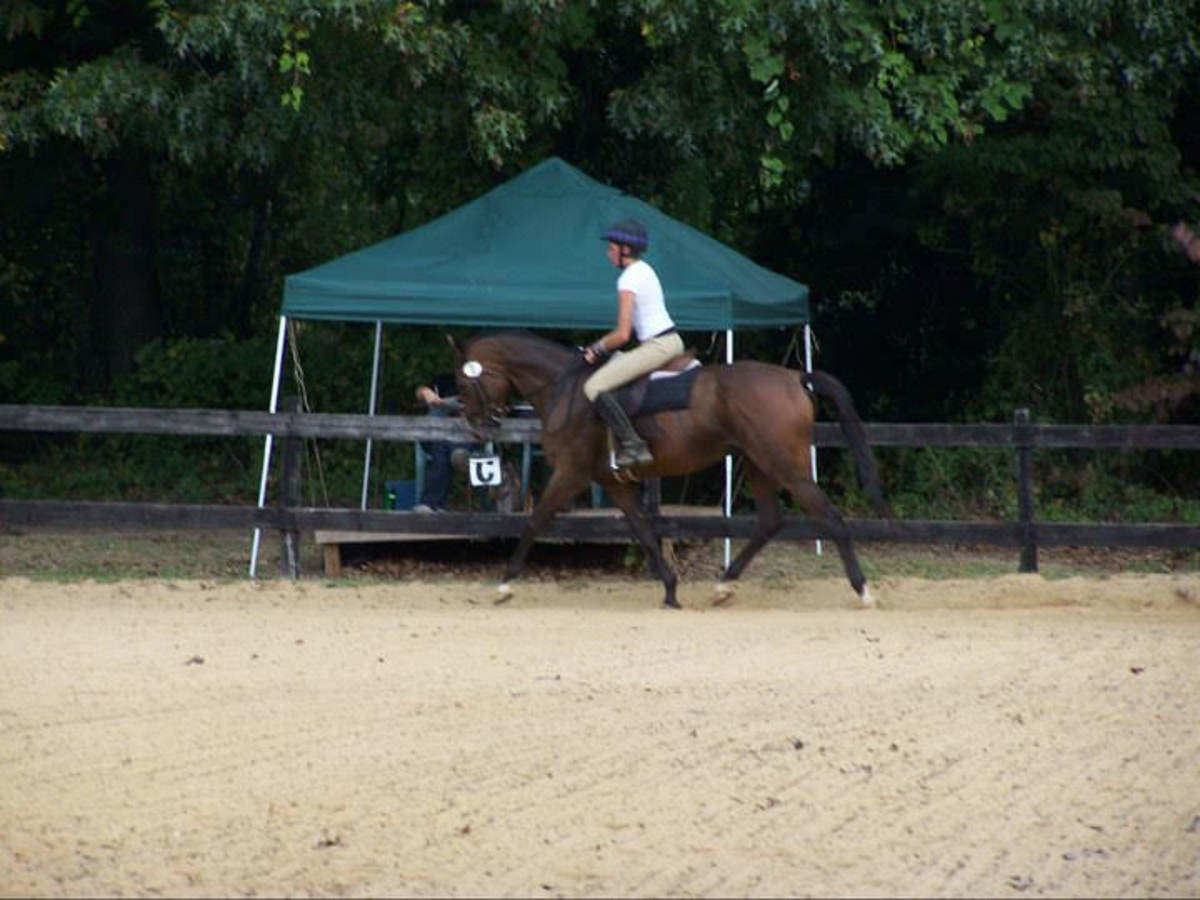 My personal horse, Kemerton, had a long racing career, and then I used him for dressage and eventing. Before retiring, he required a lot of supportive care.