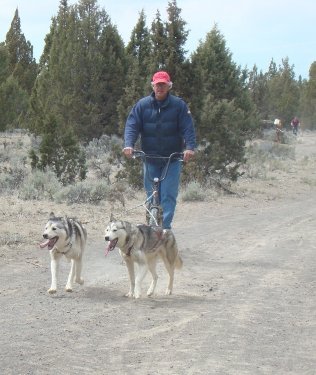 Bob running 2 Siberians on a dog scooter.