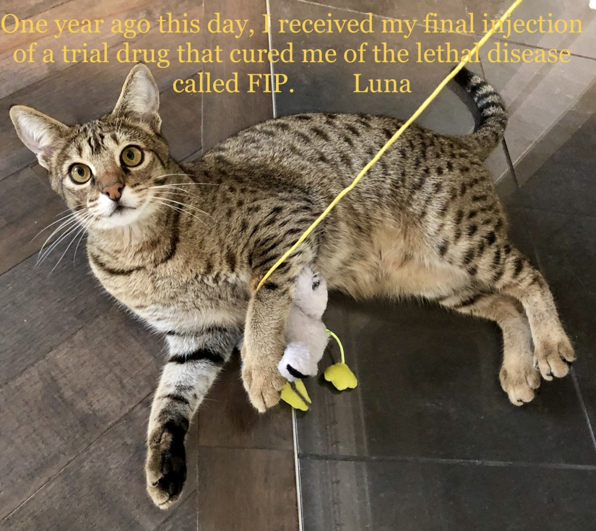 One year free of FIP.