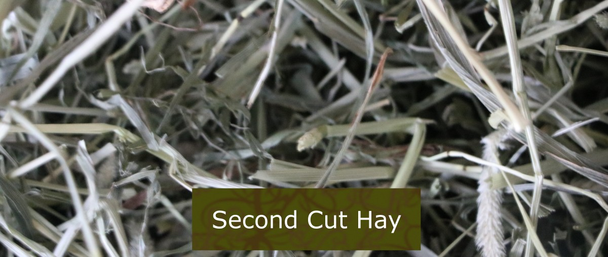 We feed our pets second cut hay, as they are healthy adults and this is the optimal cut for them.