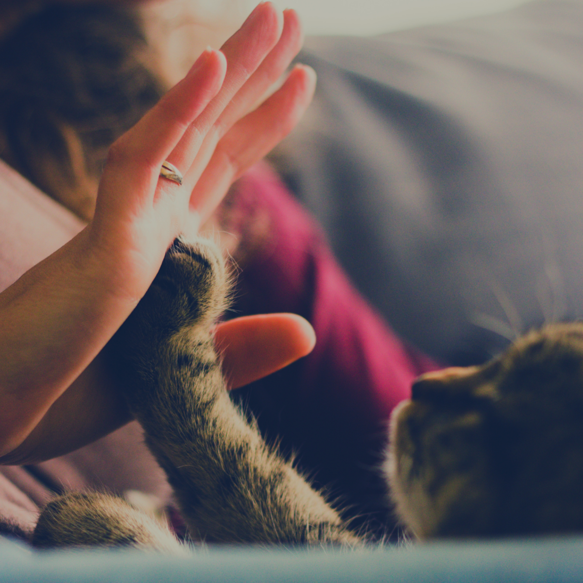 Your cat knows best! Watch your cat's behavior before committing to a litter type.