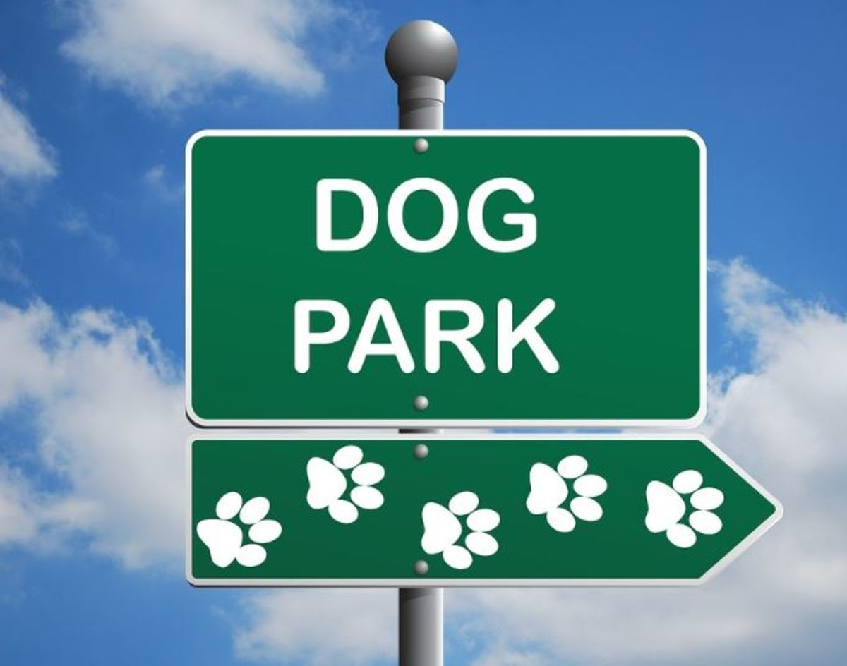 Help, My Dog Get Too Excited Around Other Dogs at the Dog Park!