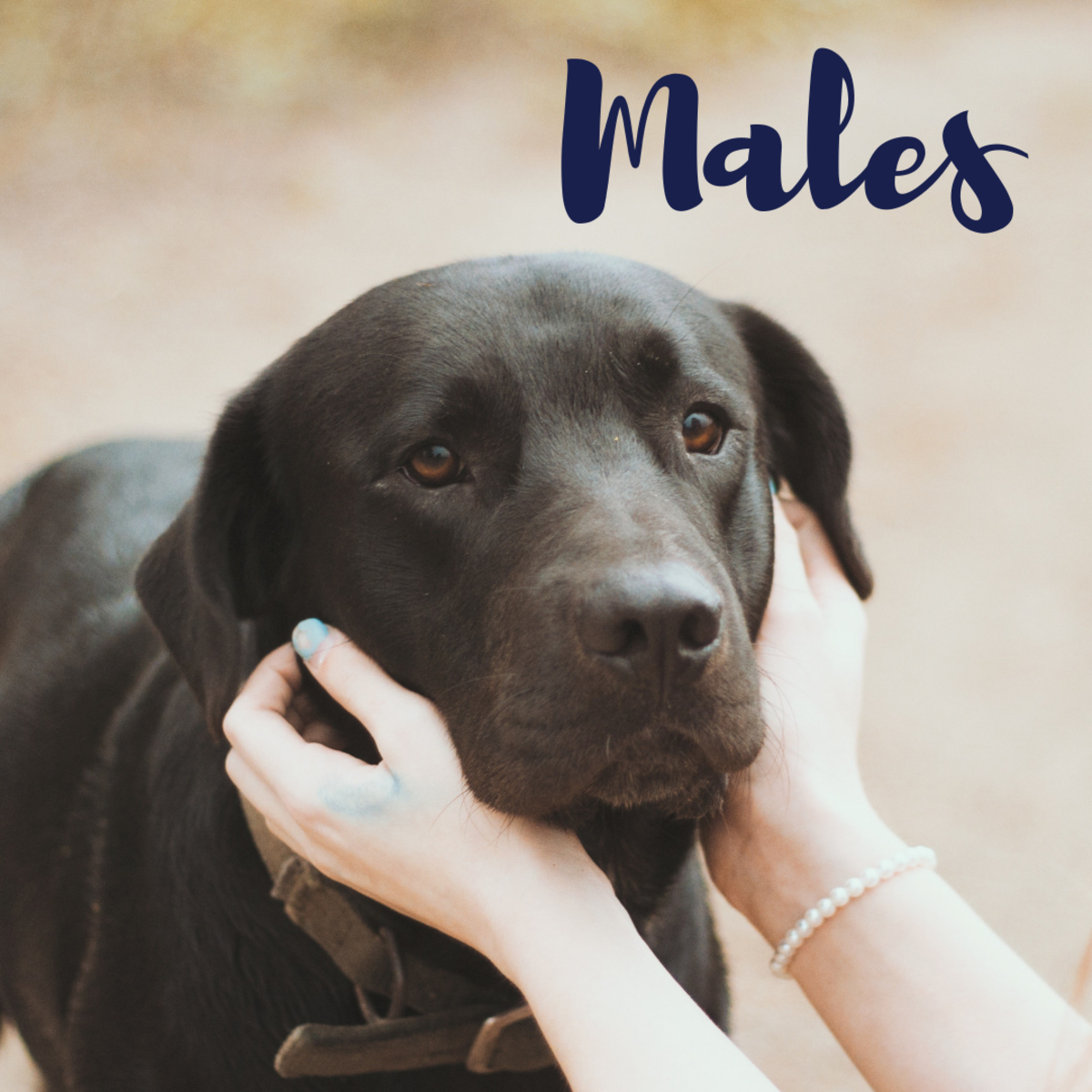 Fun names for male black labs!