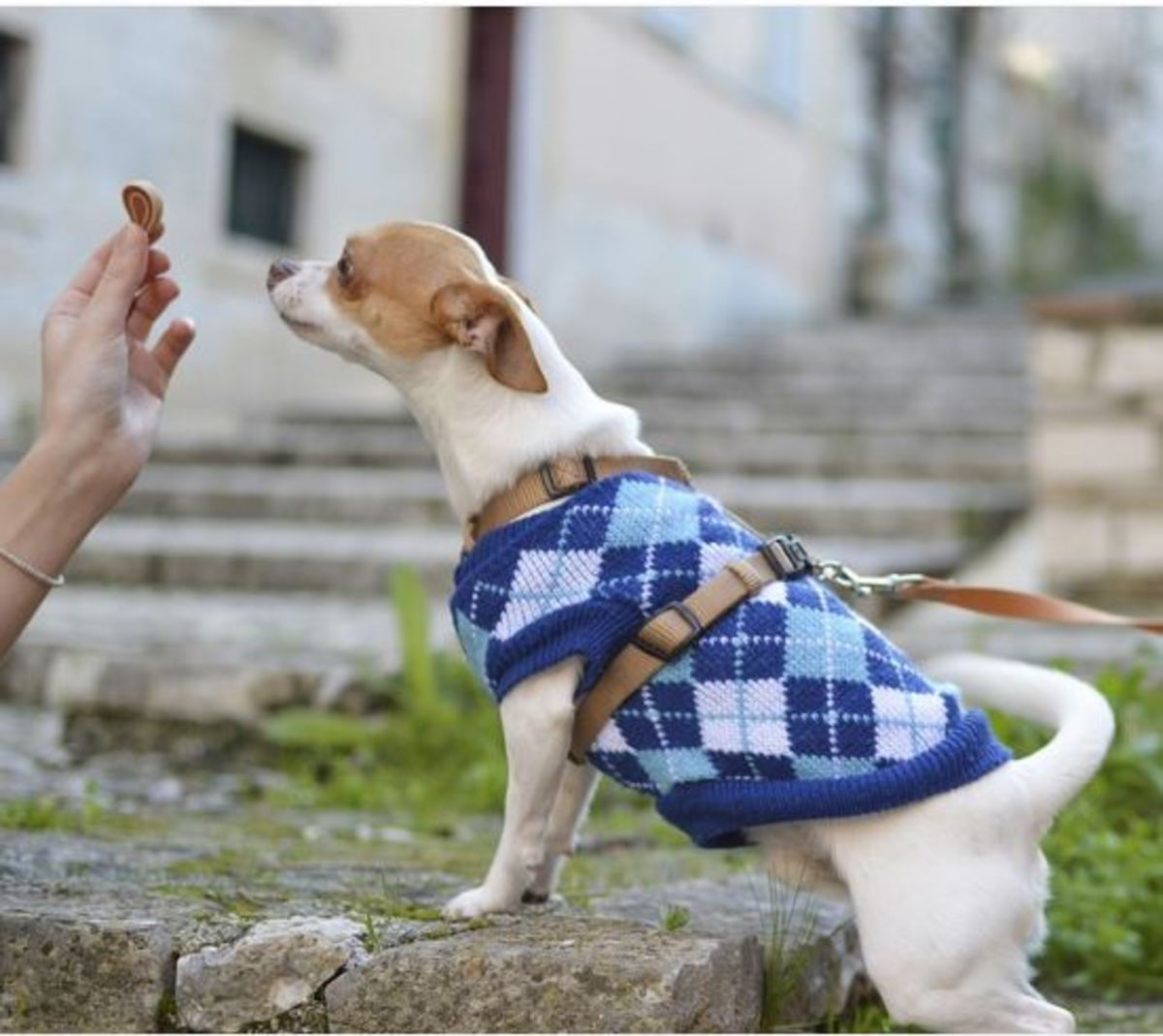 Dog owners play an important role in successful rehabilitation.