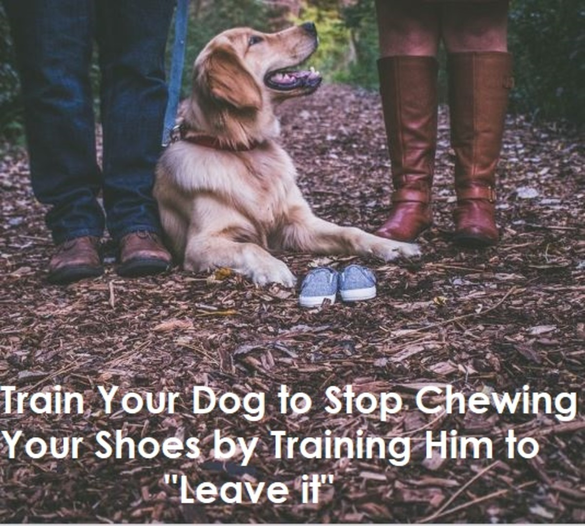 how-to-stop-a-dog-from-eating-shoes-and-slippers