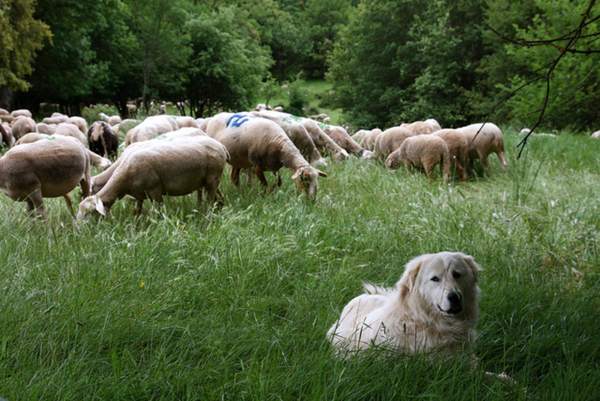 A small farm does not always have a small dog.