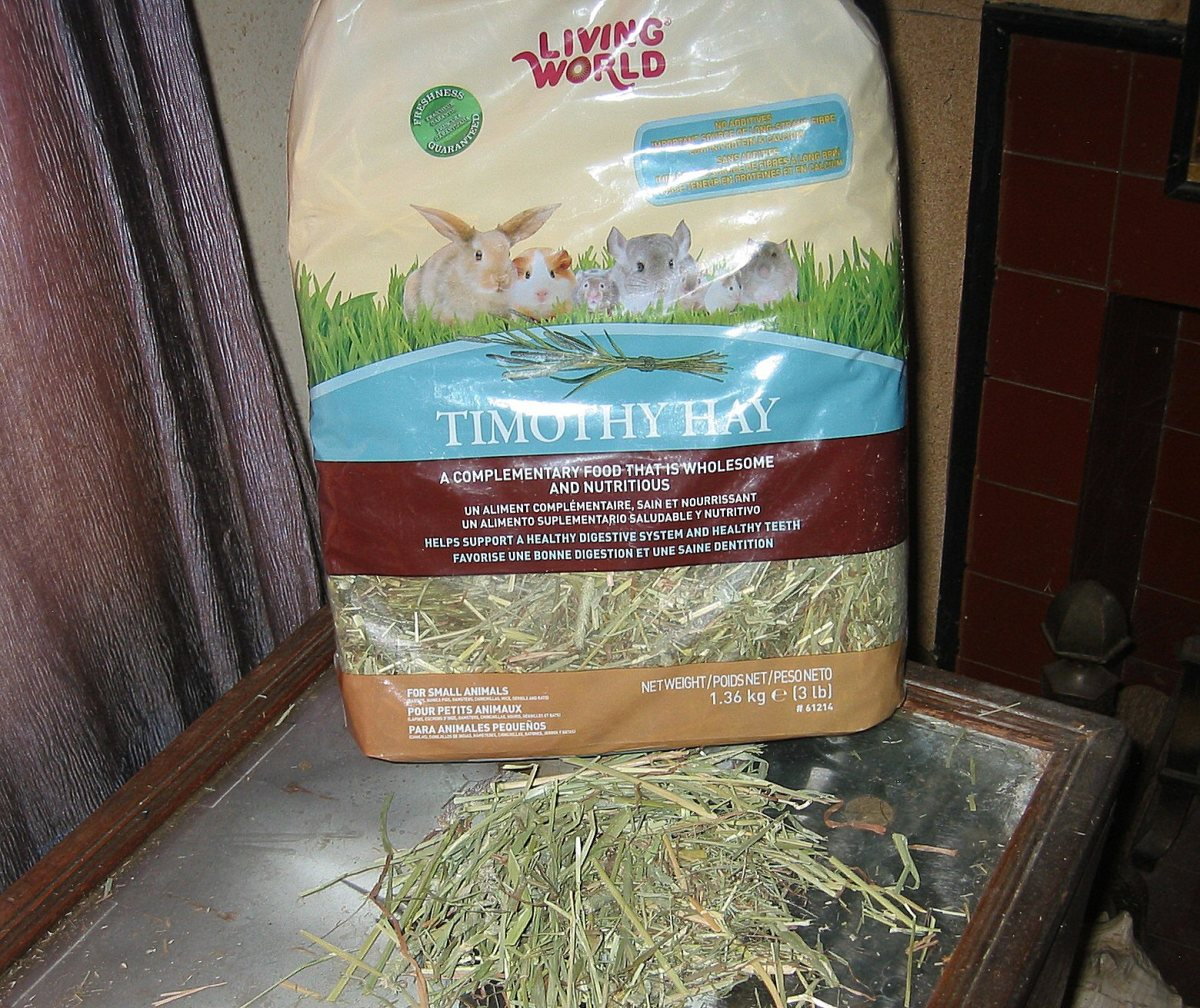 Timothy Hay - A rabbit's most important food.
