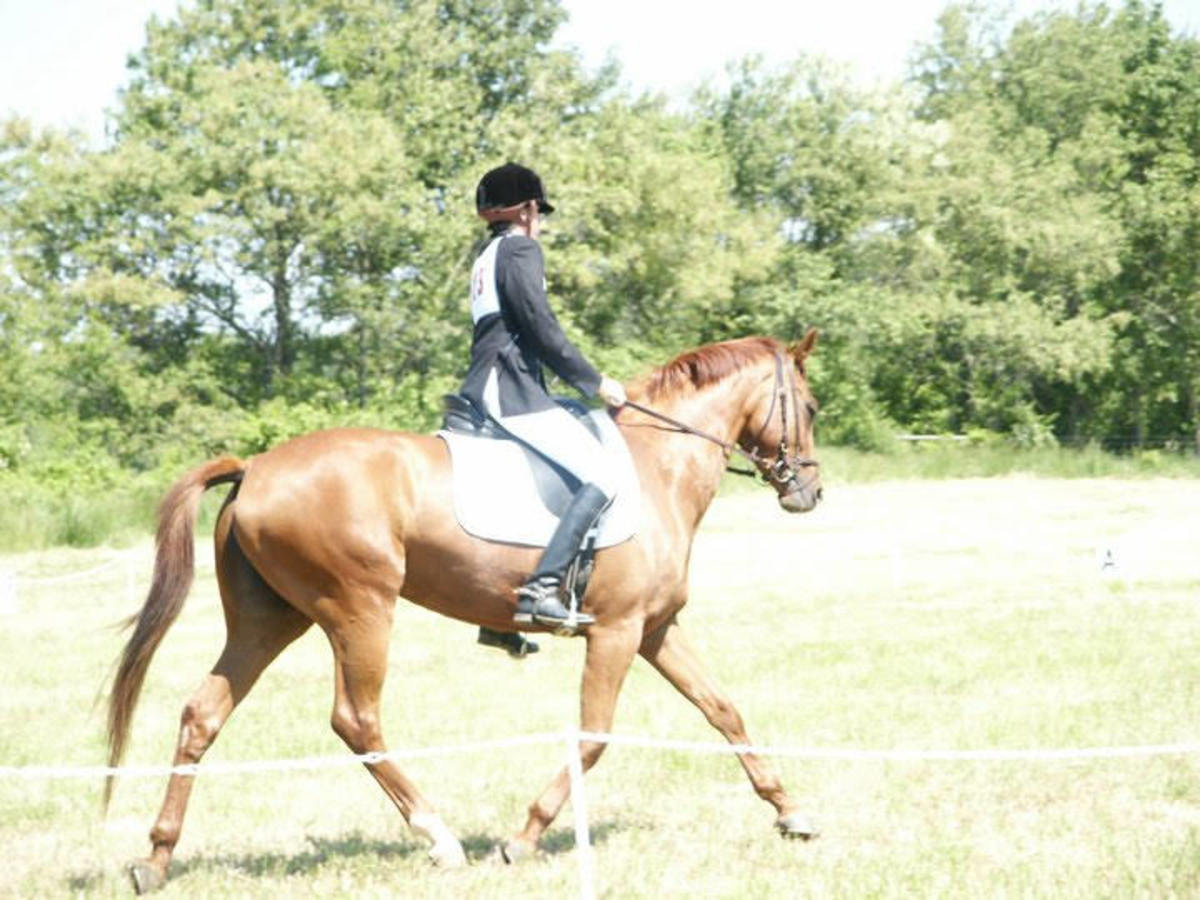 My heart horse Zelda, when she was good she was good, when she was bad she was AWFUL!