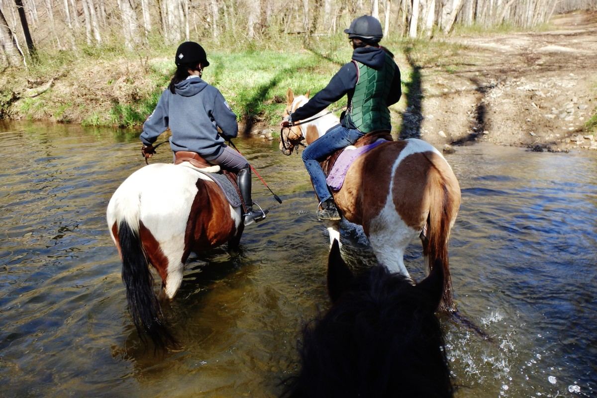 These two are geldings and reliable and true totally the same every time you pull them out of the field.