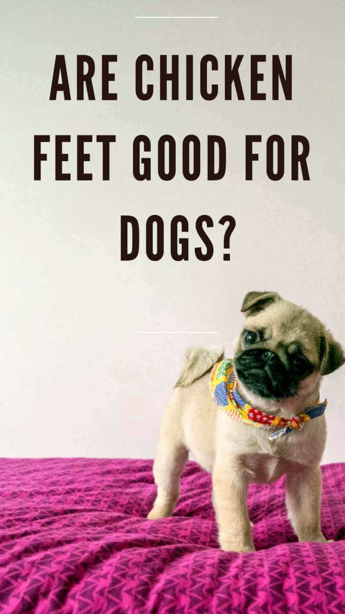 Chicken feet for dogs?