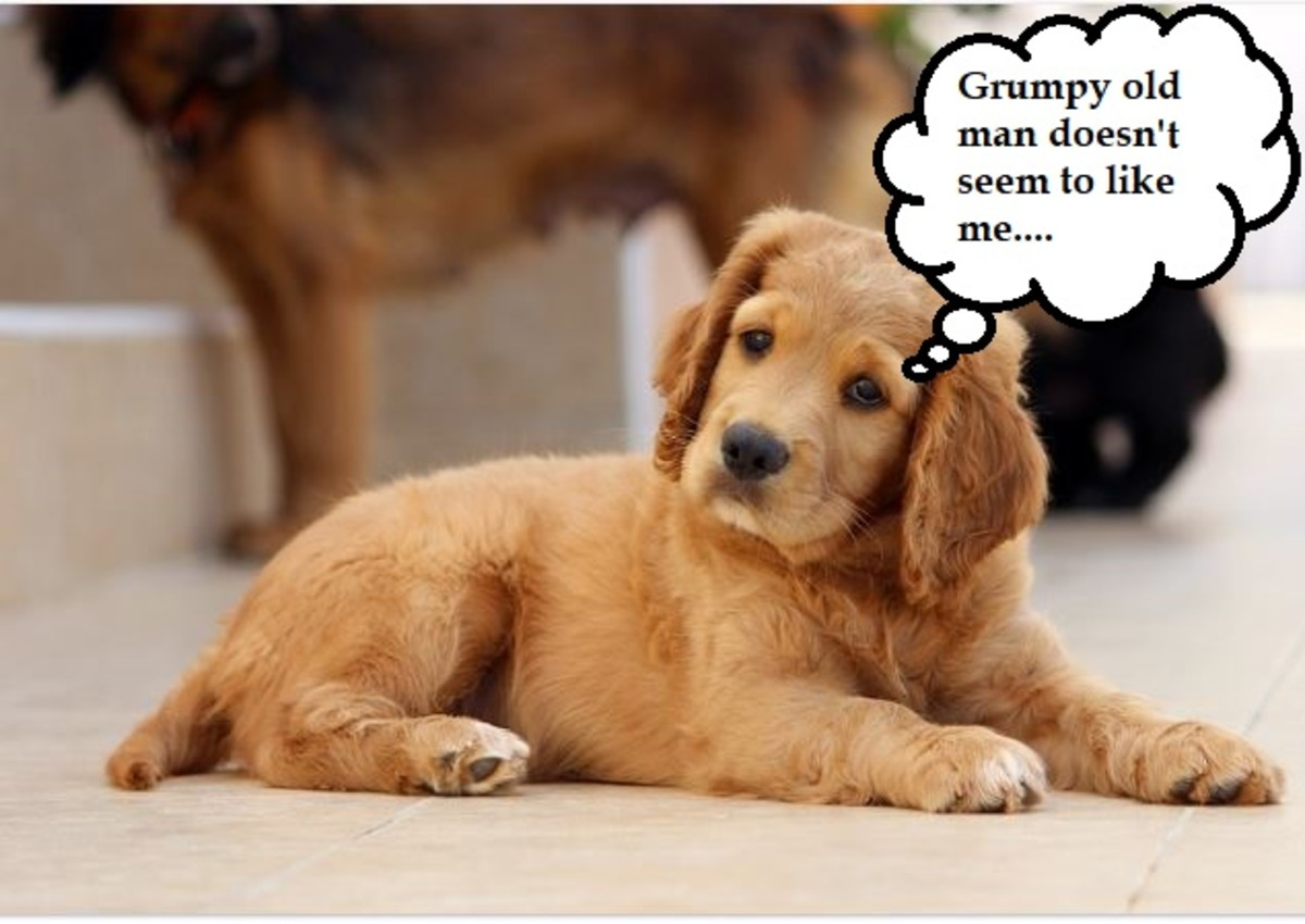 how-to-introduce-a-new-puppy-to-an-older-dog