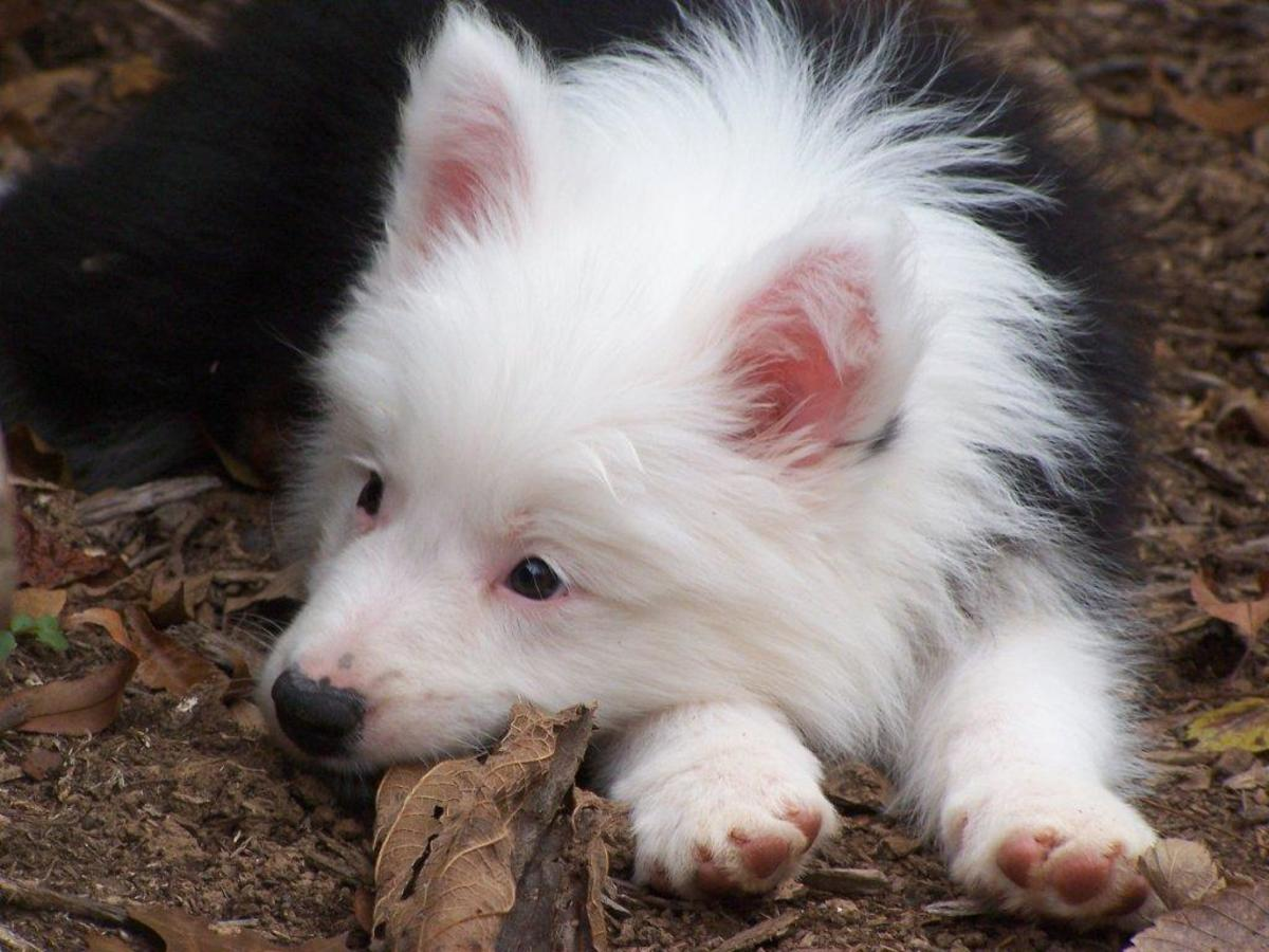 55 Meaningful, Mystical and Spiritual Names for Dogs   PetHelpful