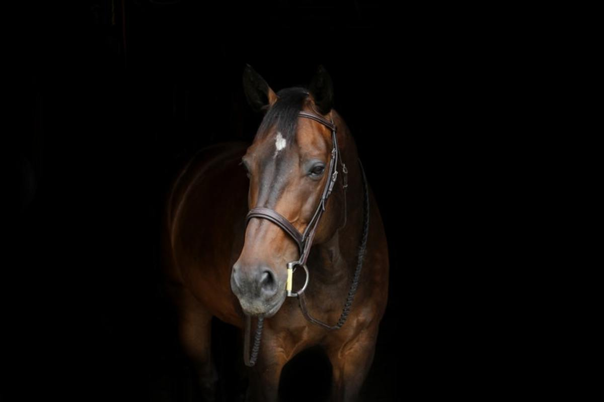 This horse displays a smooth star, which is a star with a smooth border and an irregular shape.