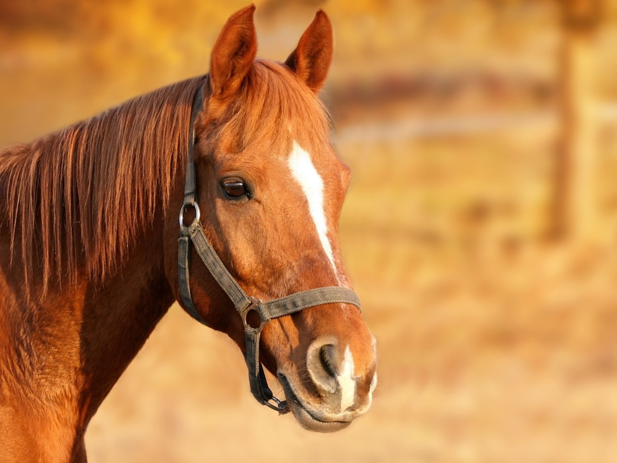 Some horses carry different markings together; in this case, both a stripe and snip.