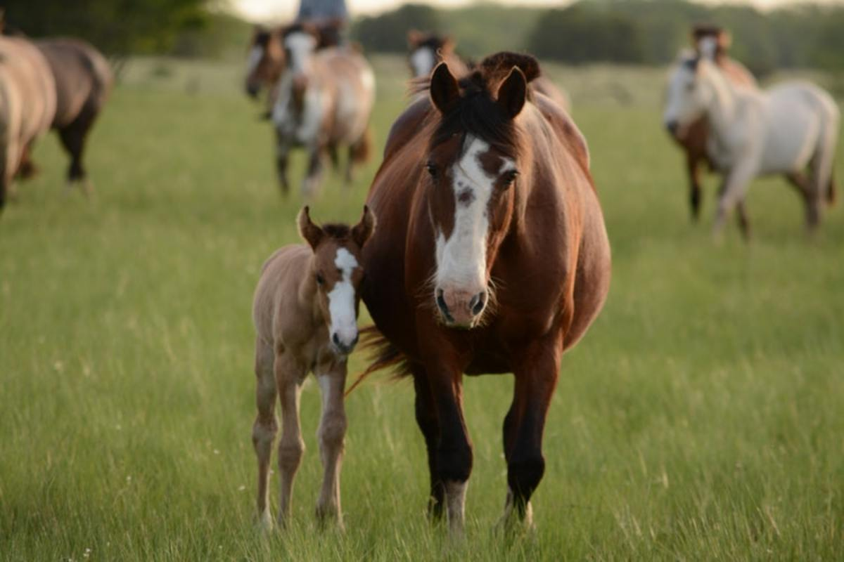 This mare and foal both display a variation of bald.