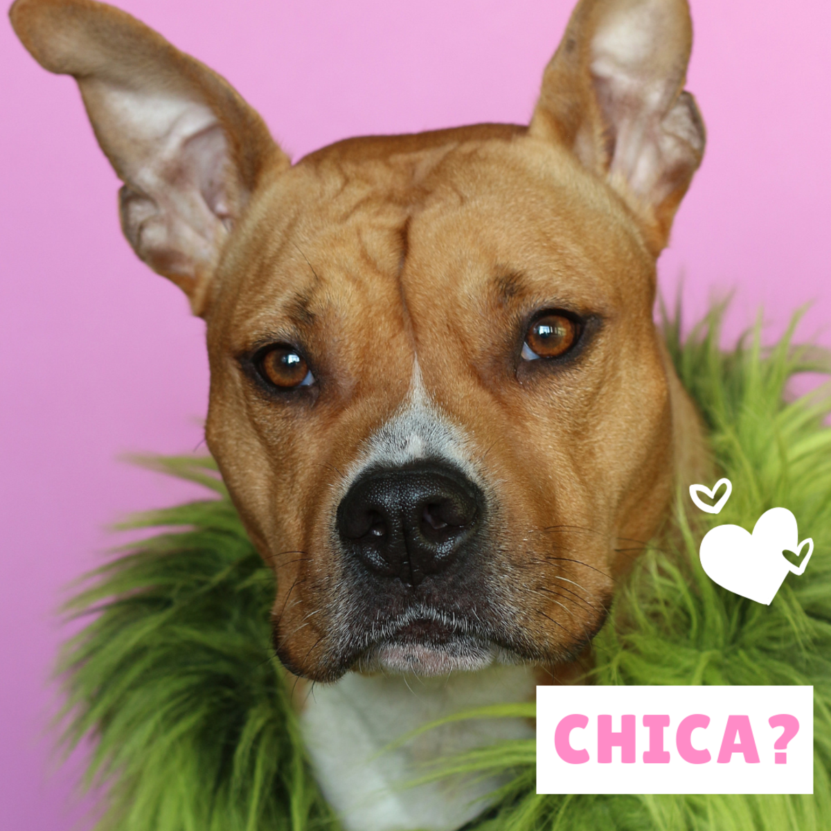 Could your pretty girl be a Chica?