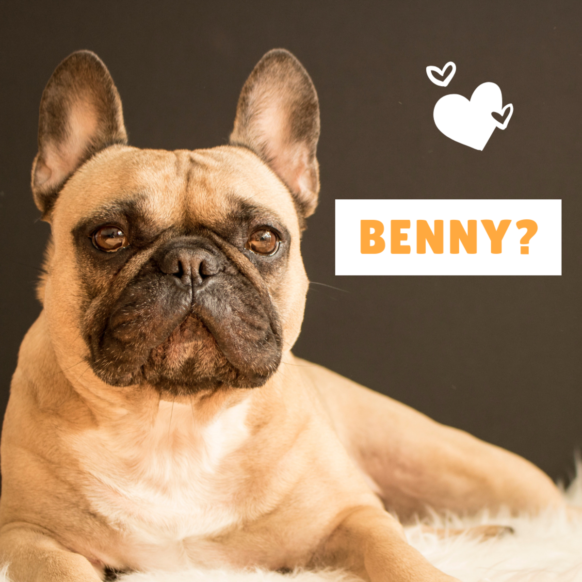 Is your new best friend a Benny?