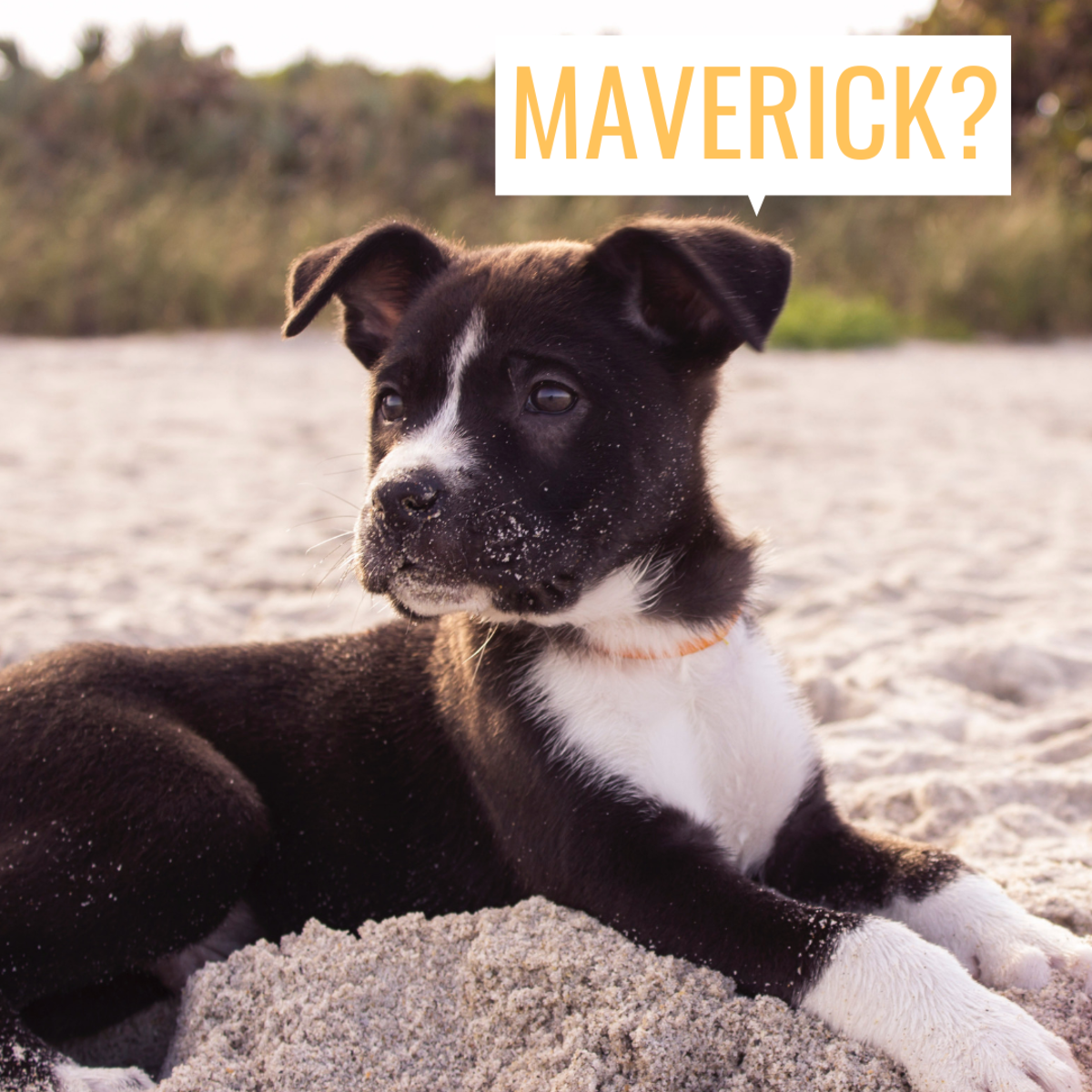 Maybe your 2-month-old puppy looks like a Magic, a Maverick, or a Mickey?