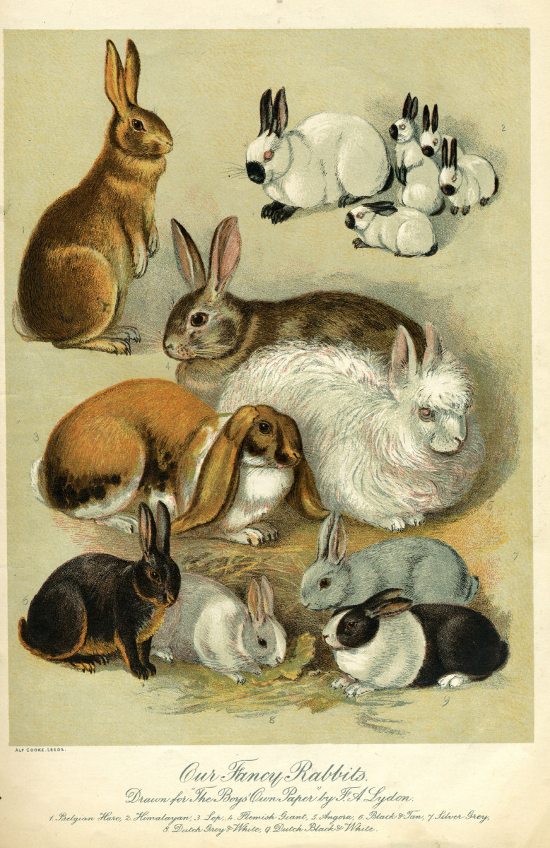 Many of the giant rabbit breeds are calmer around dogs.