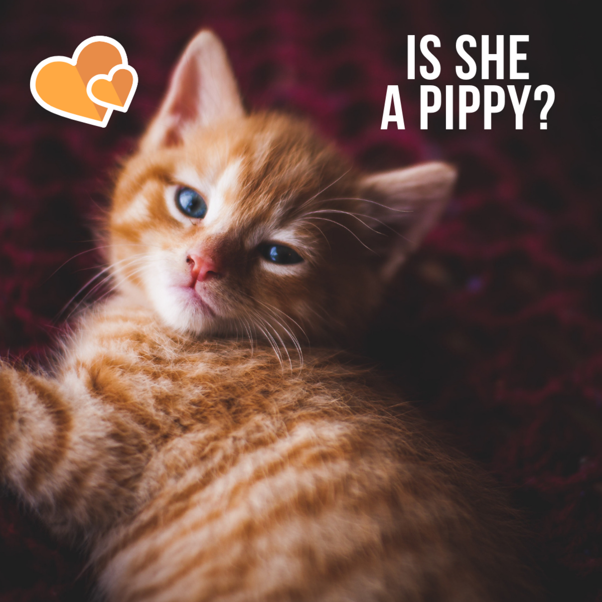Is your orange kitty a Pippy?